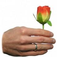 Erscheinende Rose